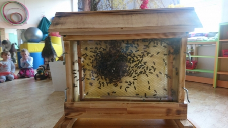 Fascynujący świat pszczół